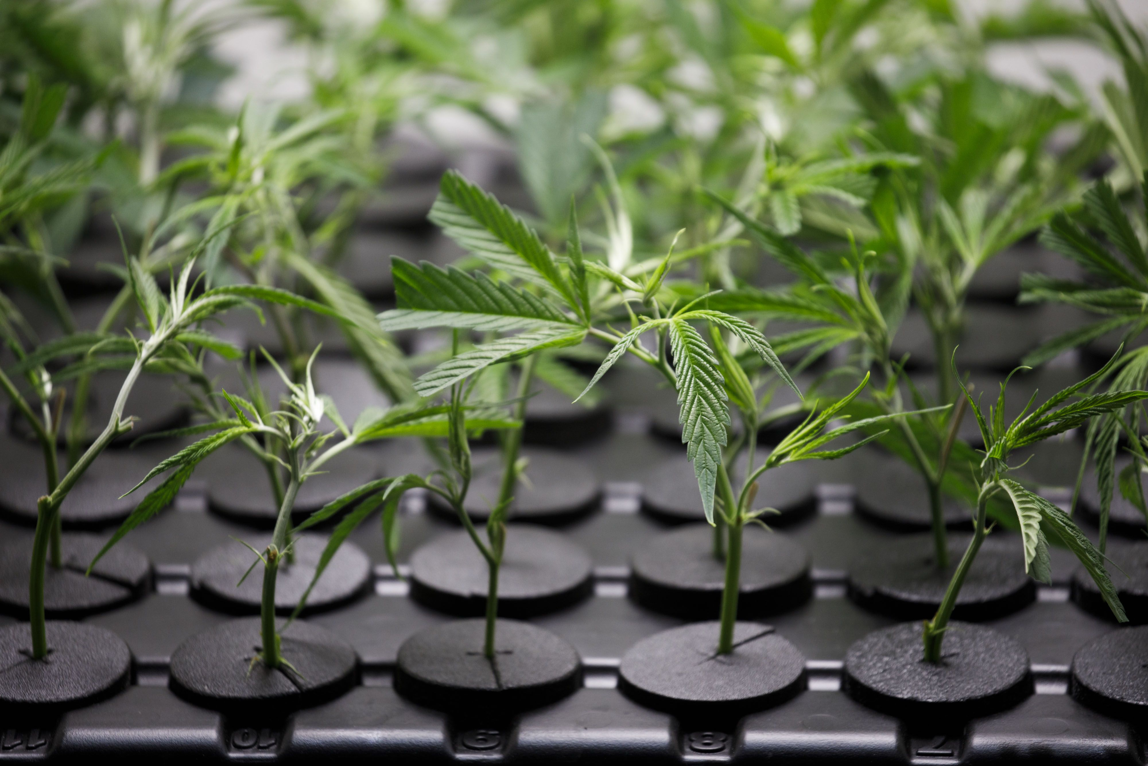 AFC Gamma, a cannabis REIT, completes first close | National Mortgage News