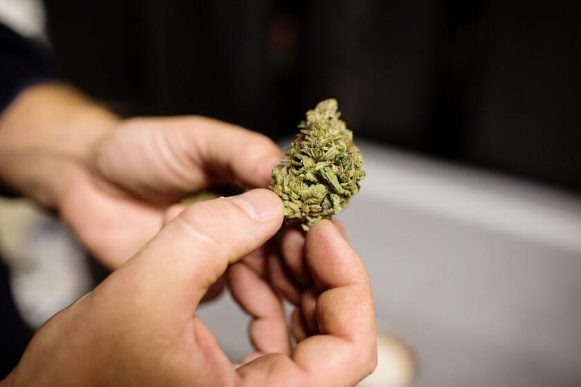 Bloomberg.Marijuana