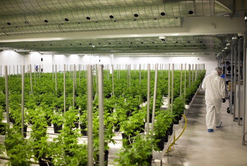 A medical marijuana growing room