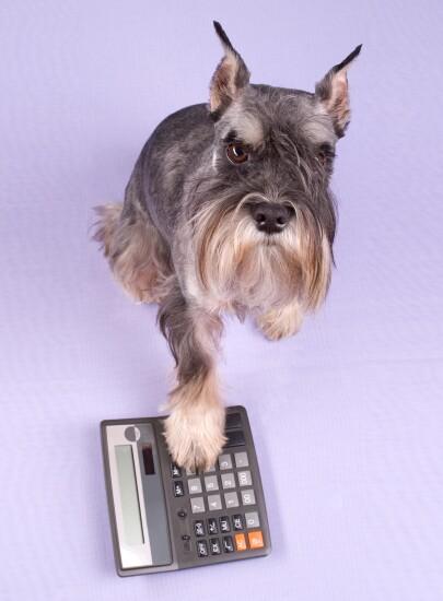 Dog and calculator