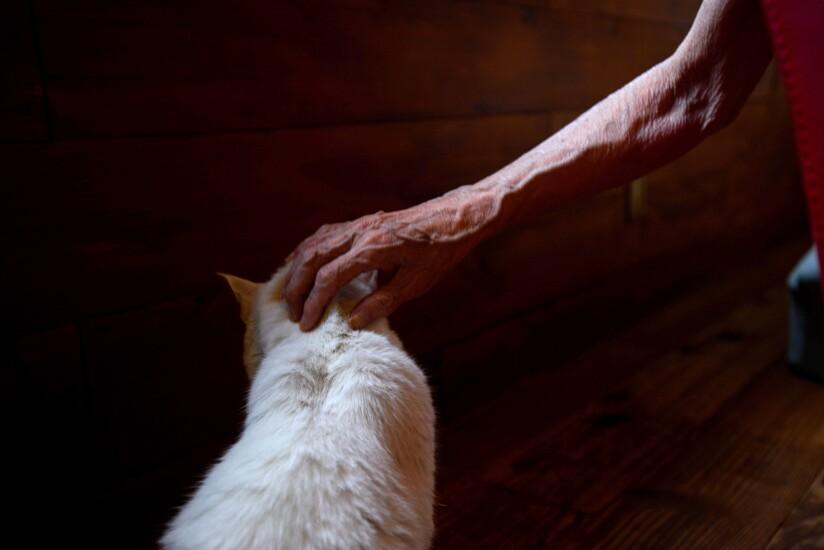 man-petting-cat-bl080614