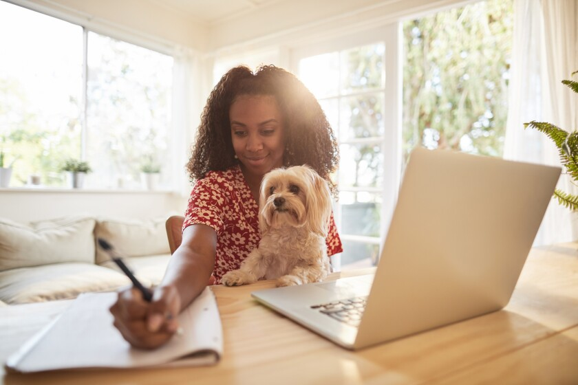 Working with pets