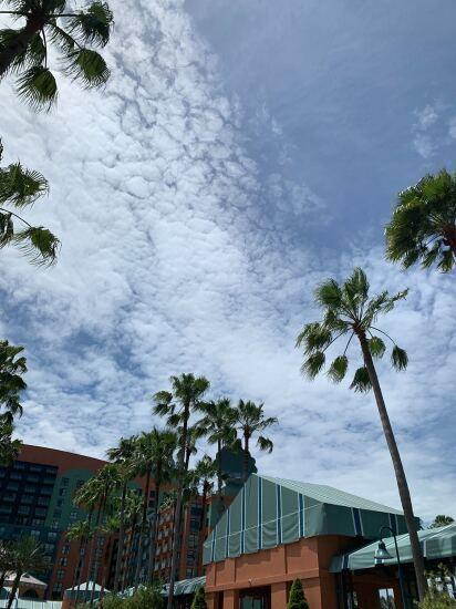 Random palms in Orlando - CUJ 062019