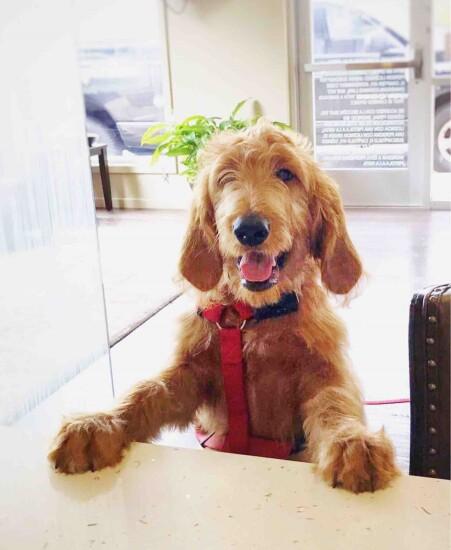 Benchmark Bank -- Dog at Work