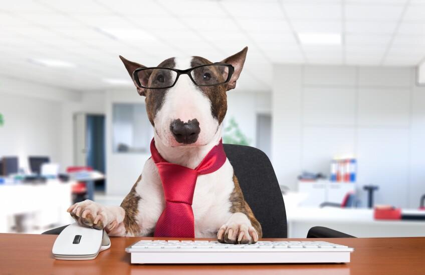 dog-desk-tie-115131101-adobe.jpg