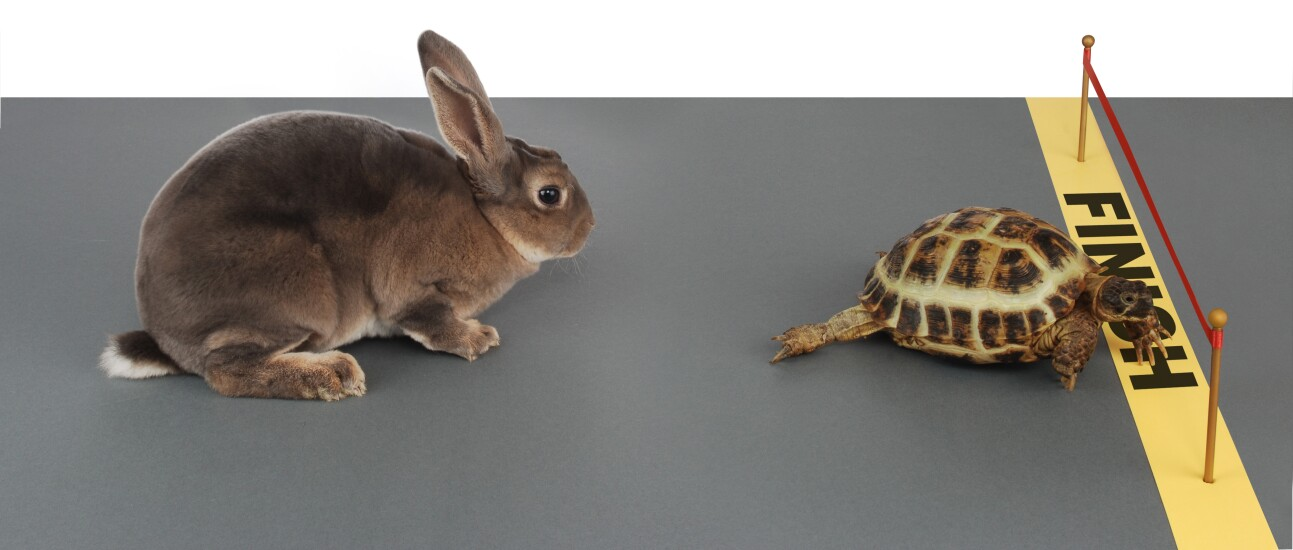 Tortoise beating the hare