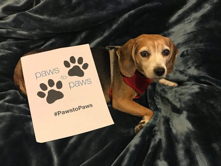 rea-associates-paws-2017